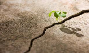 plant-growing-through-crack-in-concrete22